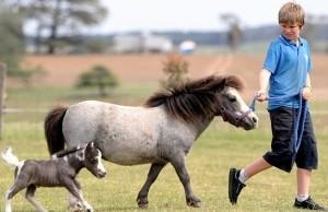 min-pony