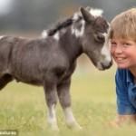 min-pony2